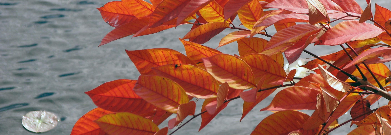 fall-hike-banner